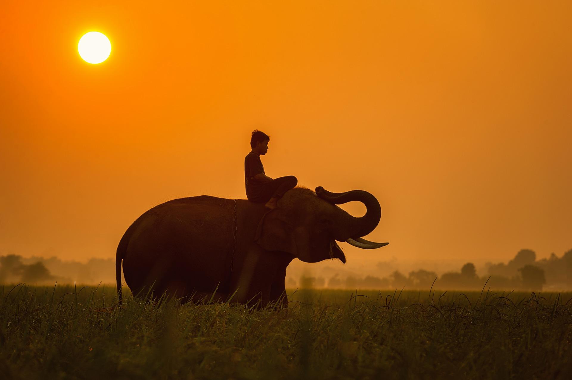 Boy riding an elephant